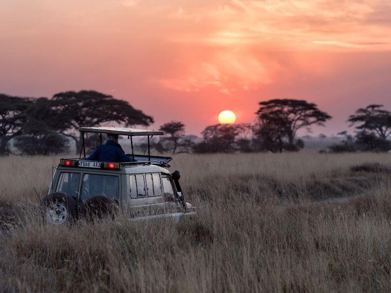 Game drive Zambia