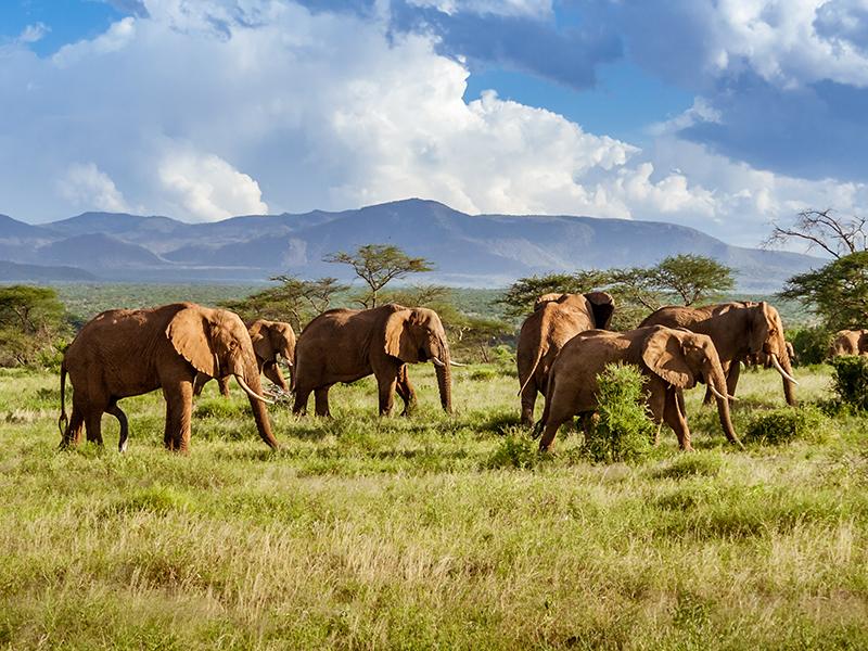herd of elephants Kruger National Park