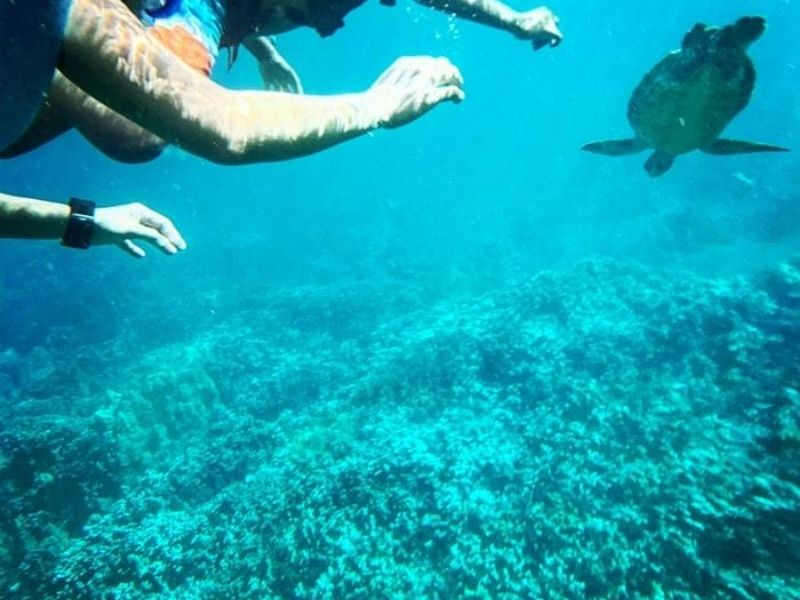 Snorkeling in the Caribbean Sea